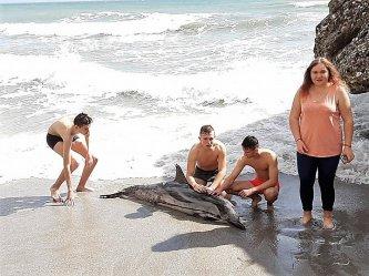 Piotrkowianie uratowali delfina