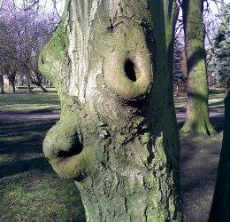 Tolkienowski stwór w piotrkowskim parku?