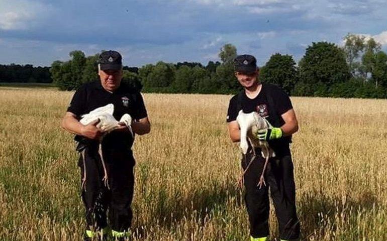 Strażacy z Woli Krzysztoporskiej pomogli bocianom