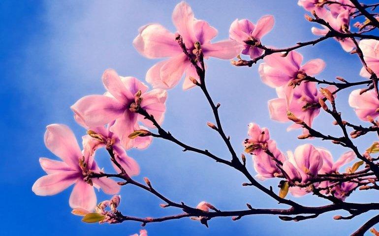 Wiosna, ach to Ty!