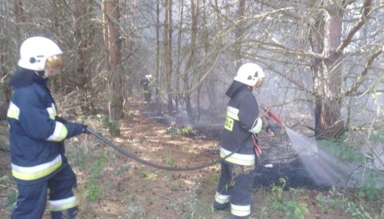 Pożar lasu we Włodzimierzowie
