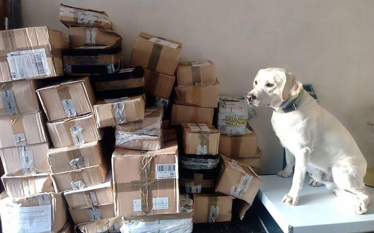Labrador pomógł w przejęciu kontrabandy