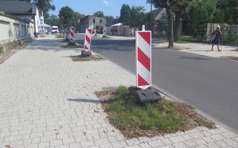 Biało-czerwone drzewa na Cmentarnej w Piotrkowie