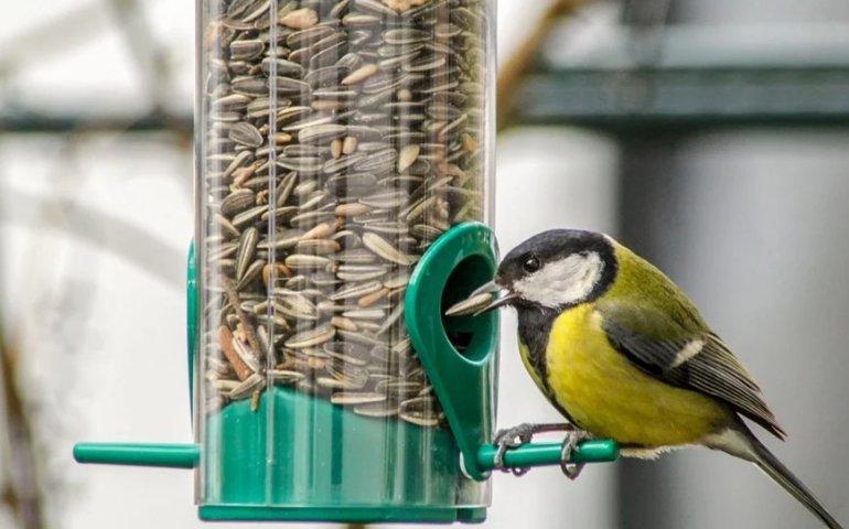 Zimowe dokarmianie ptactwa może nam się opłacić