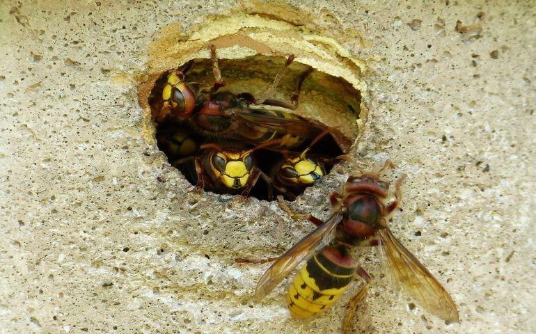 Letnie problemy z owadami