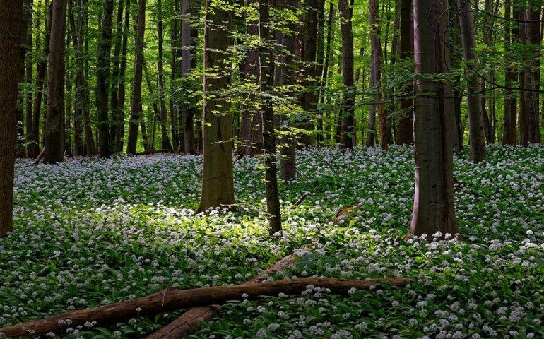 Do Wielkanocy zakaz wstępu do lasów