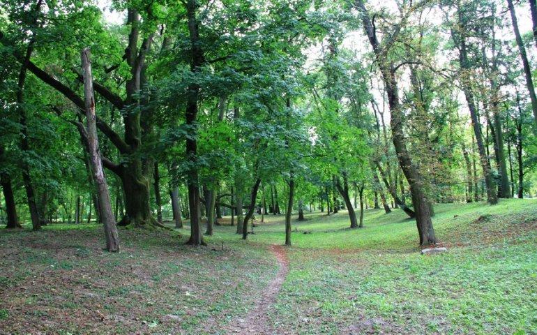 Kto odnowi moszczenicki park?