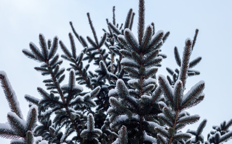 Święta w regionie nie będą białe